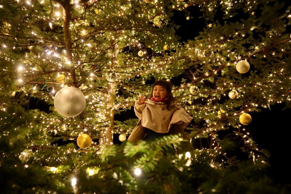 クリスマスツリーの中からこんにちは