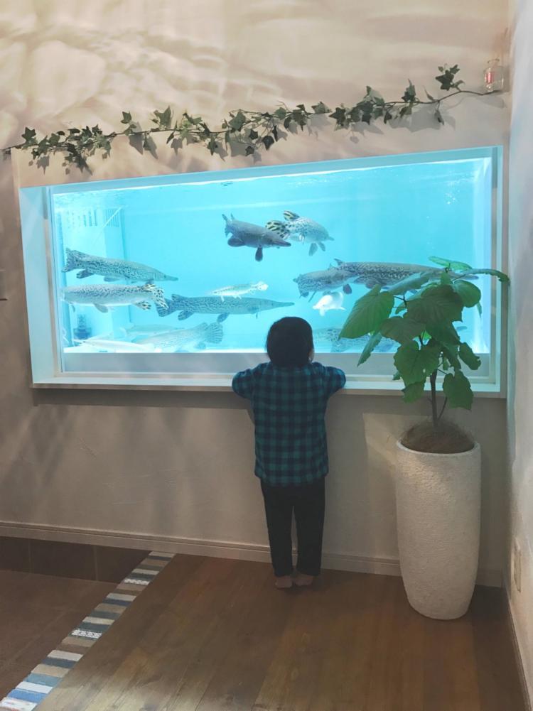 小さな水族館